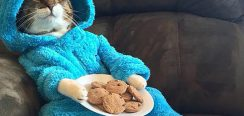 Cookie Monster Pyjamas Kitty