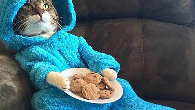 Cookie Monster Pyjamas Kitty
